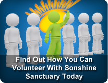 Find out how you can volunteer